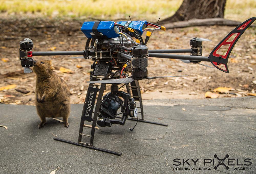 Quokka Drone Inspector